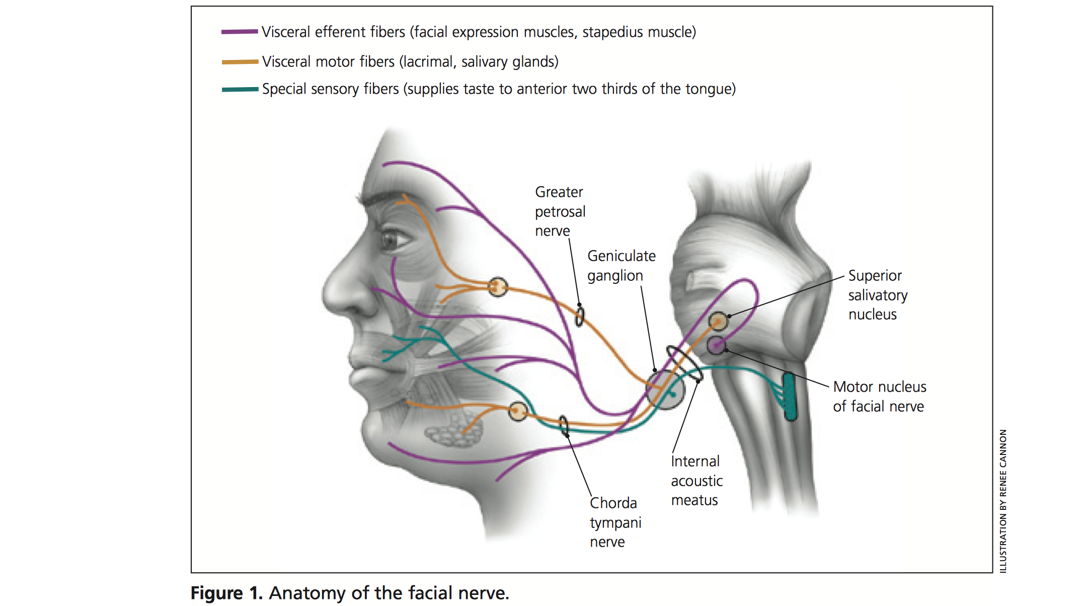 1st Ddx Of Visual Symptoms